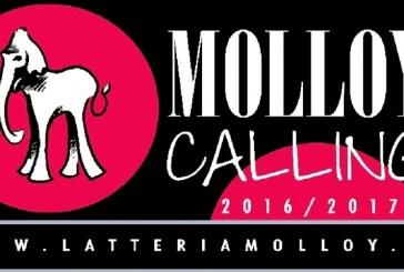 MOLLOY CALLING