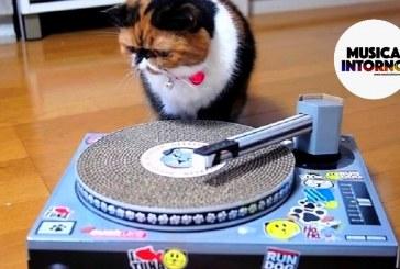 PLAYLIST IN RADIO, MUSICA COME ISTINTO!