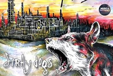 STRAY DOGS, SUL FILO DELLA CHITARRA ELETTRICA